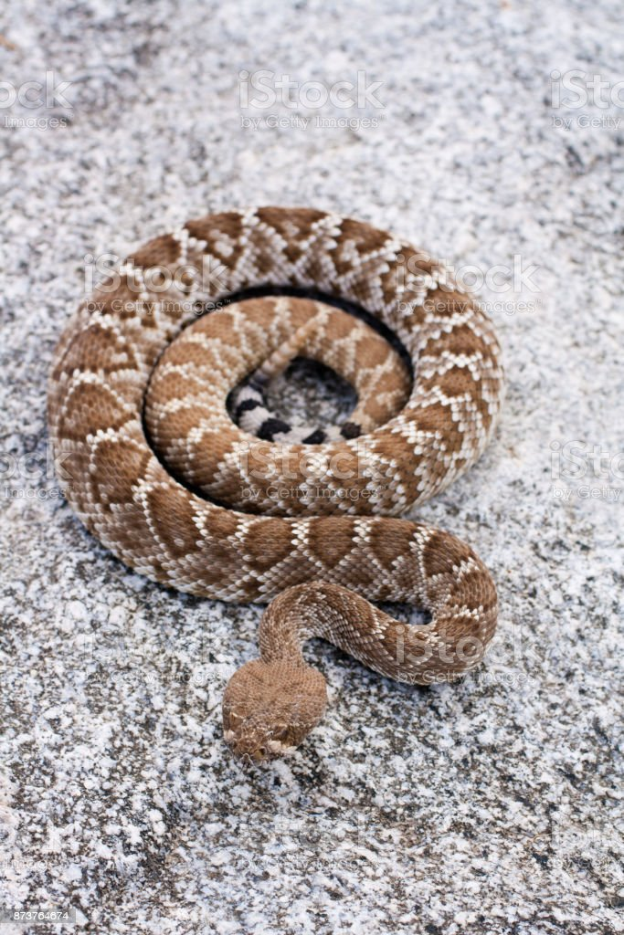 Coiled stock photo