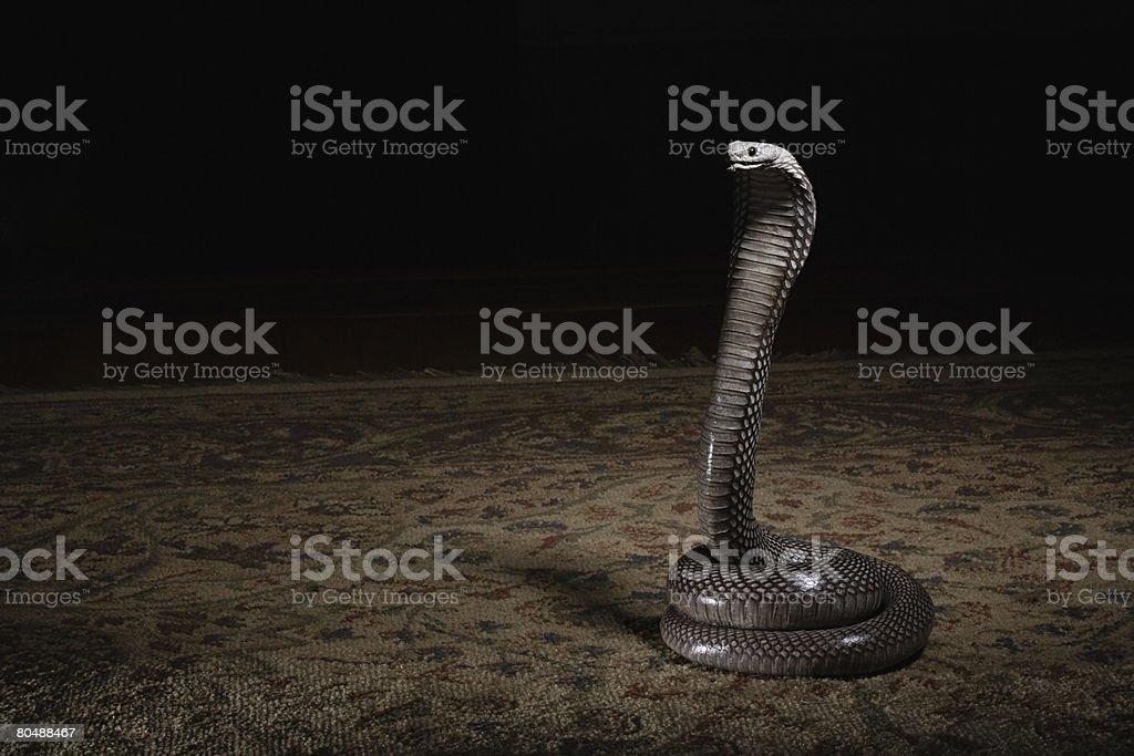 코일 뱀 royalty-free 스톡 사진