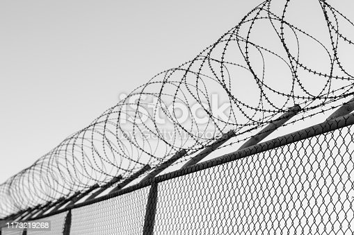 Coils of razor wire on top of a wire mesh perimeter fence