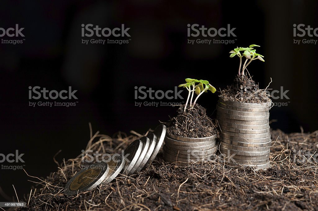 coins and plant - money growth concept. Dark background stock photo