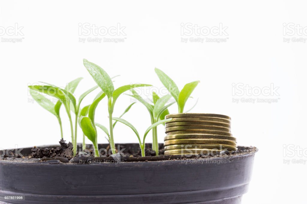 Coins and young green sprouts in a pot on a gray background stock photo