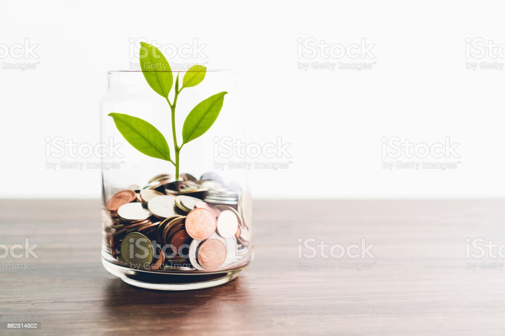 Coins in a bottle and the green tree, Represents the financial growth. The more money you save, the more you will get. stock photo