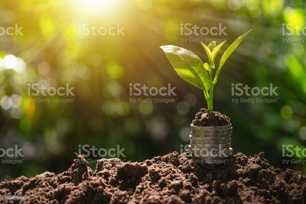 Coins with plant on top put on the soil in green nature background for business growth concept. stock photo