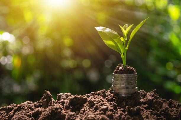 비즈니스 성장 개념에 대 한 녹색 자연 배경에서 토양에 넣어 위에 공장 동전. - growth 뉴스 사진 이미지