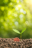 istock Coins with plant on top put on the soil in green nature background for business growth concept 1282632277