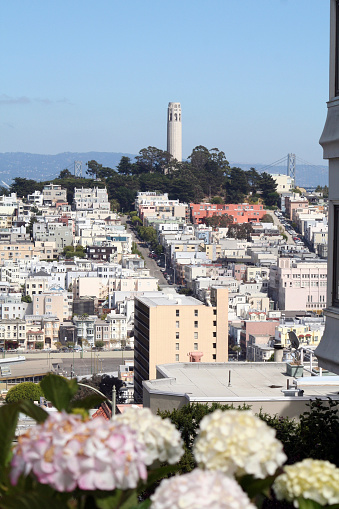 istock Coit Tower from Lombard Street 91568946