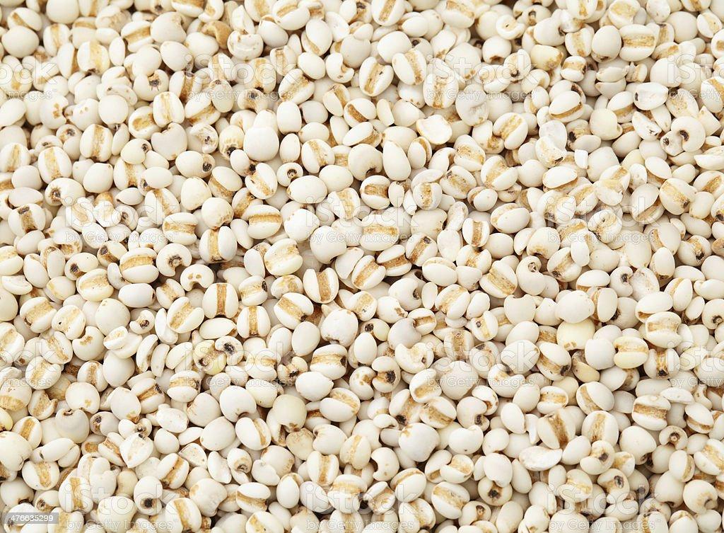 Coixseed background stock photo