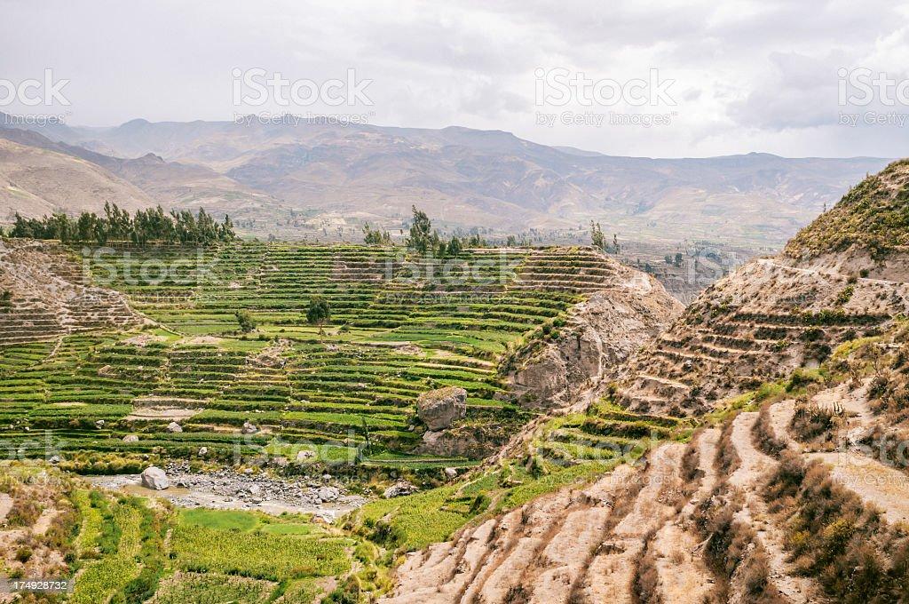 Colca Canyon in Peru royalty-free stock photo