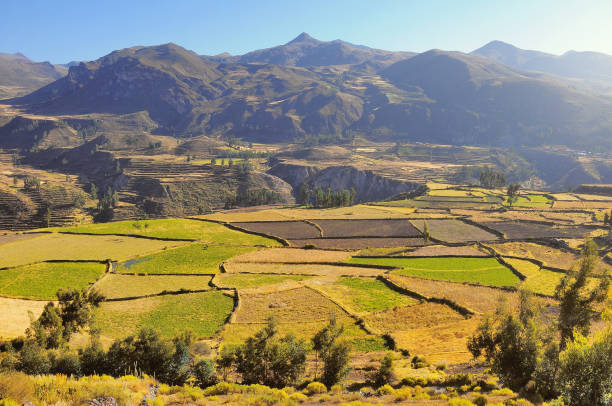 Colca Canyon, Peru,South America. One of the deepest canyons in the world. stock photo