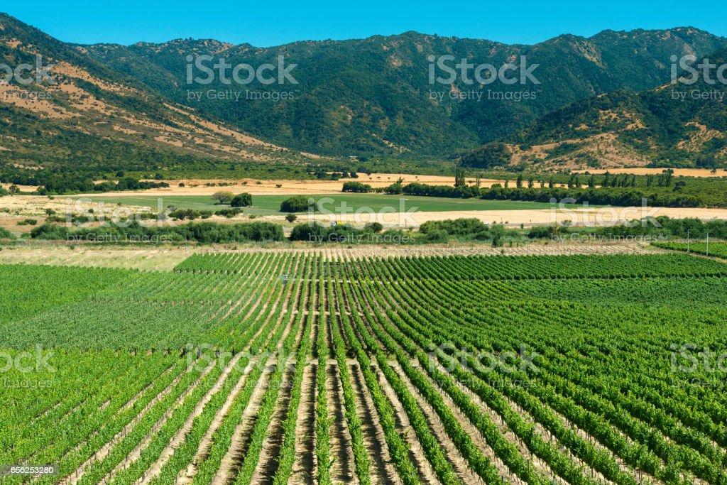 Colchagua Valley stock photo