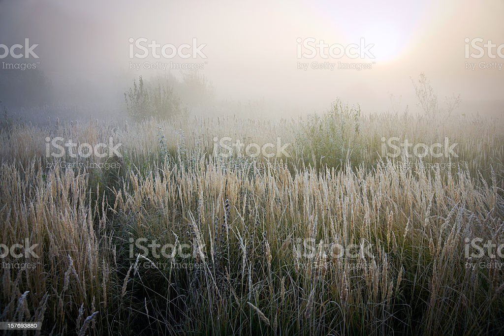 Cold autumn morning in fields royalty-free stock photo