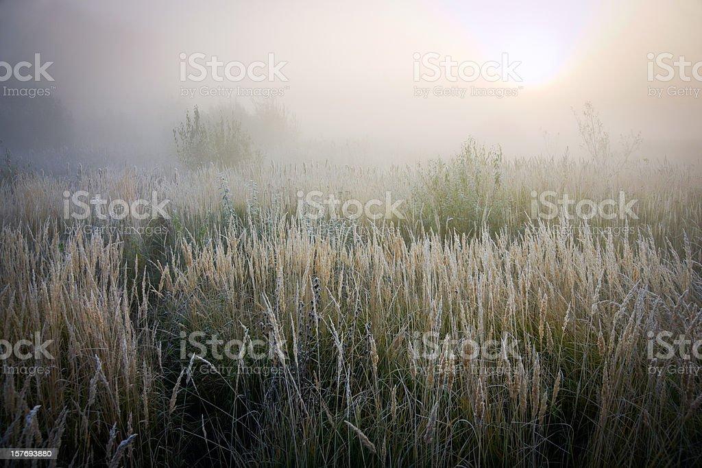 Холодный Осенний день в поля стоковое фото
