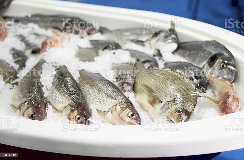 Cold container with seabass and dorado royalty-free stock photo