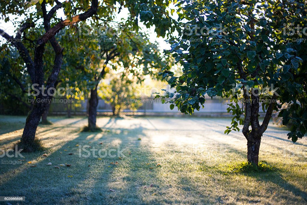 Cold early morning sunrise in a frosted garden stock photo
