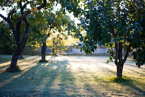 Cold early morning sunrise in a frosted garden – Foto