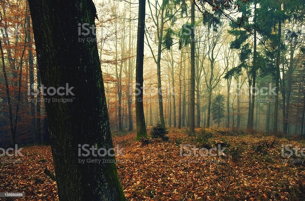 Cold foggy morning in November royalty-free stock photo