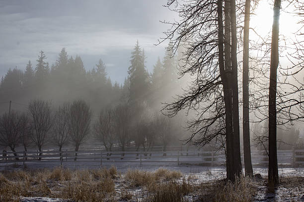 Kalte Foggy Morgen – Foto