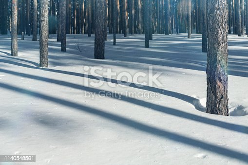 Cold forest in winter. Pure pine forest in sunny weather. Frosty air and pure white snow. Winter fairytale