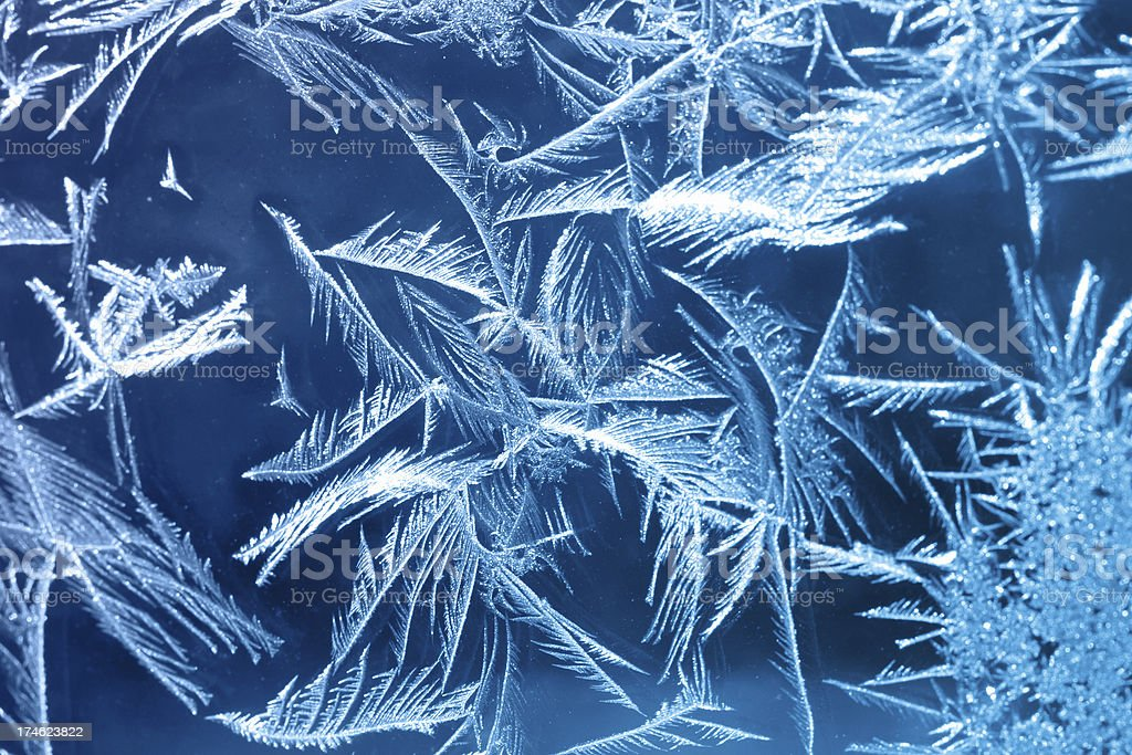 Cold Frost royalty-free stock photo