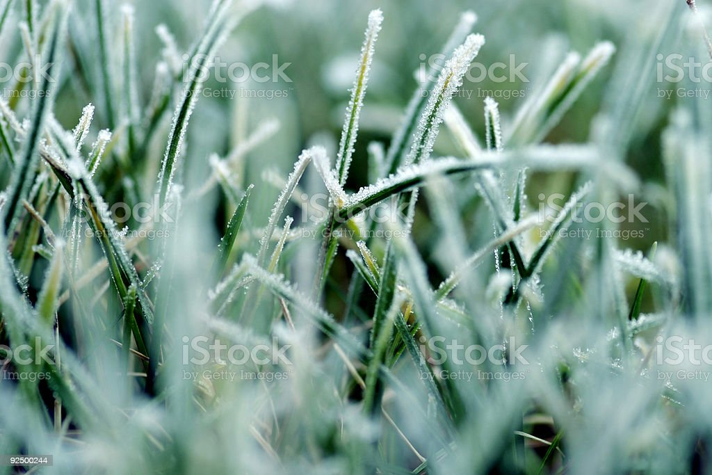 cold grass royalty-free stock photo