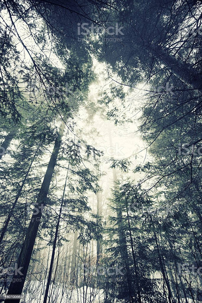 Cold misty winter forest royalty-free stock photo