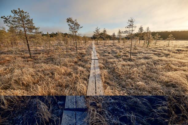 Cold morning and boardwalk in the middle of frozen swamp in Finland stock photo
