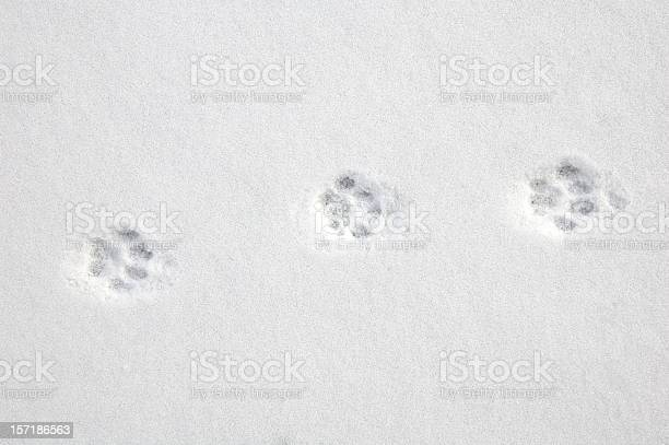 Free dog footprint Images, Pictures, and Royalty-Free