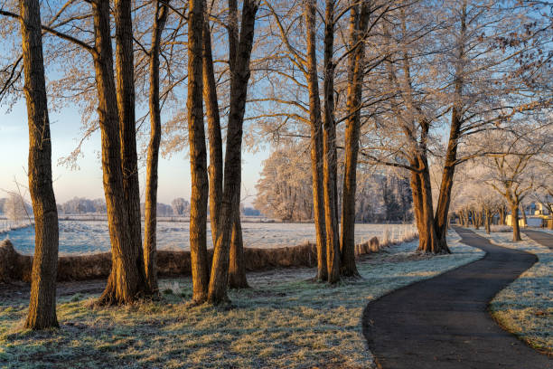 Cold sunny winter morning. Bicycle lane with frost on trees. stock photo