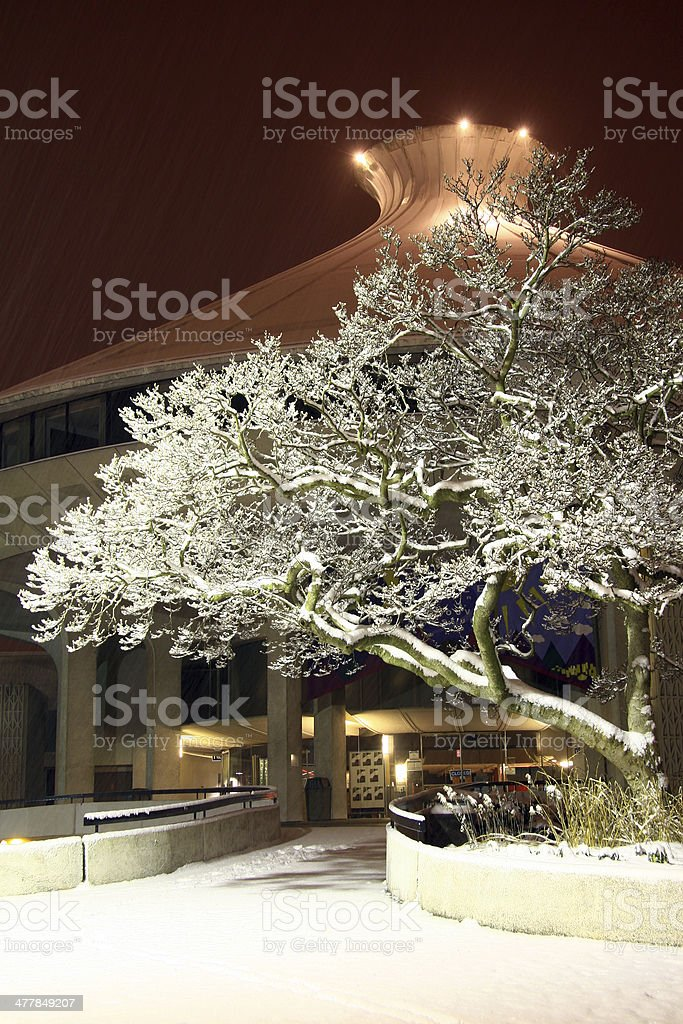 Cold Tree of Winter royalty-free stock photo
