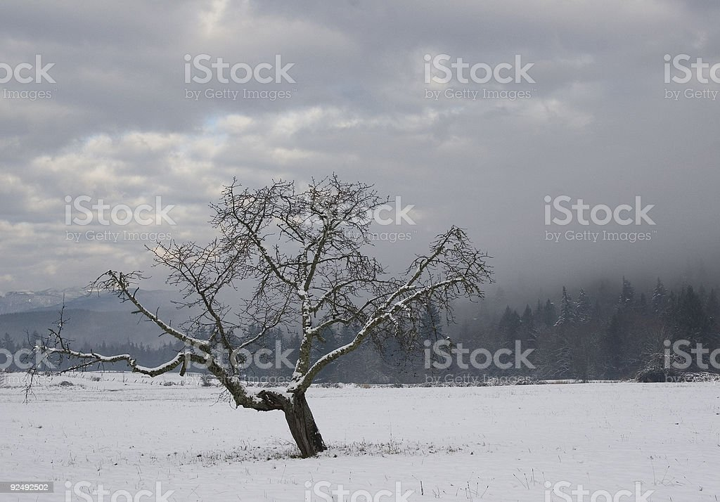 Cold Tree royalty-free stock photo