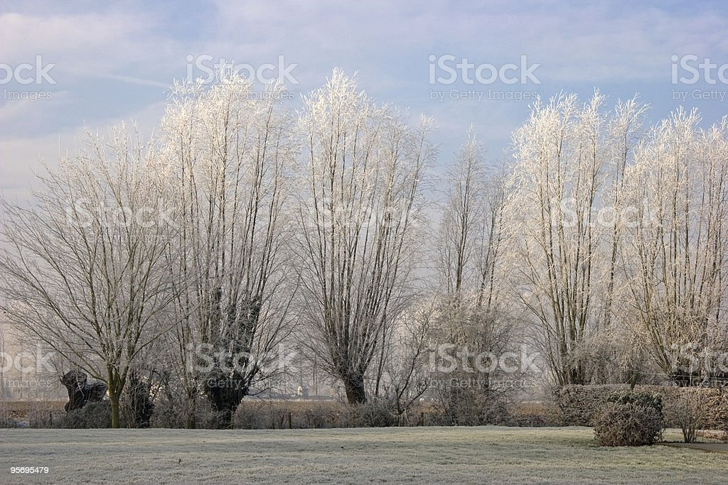 cold Willow  trees royalty-free stock photo