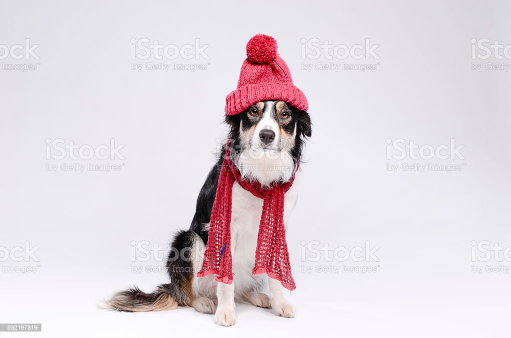 Hiver froid chien - Photo