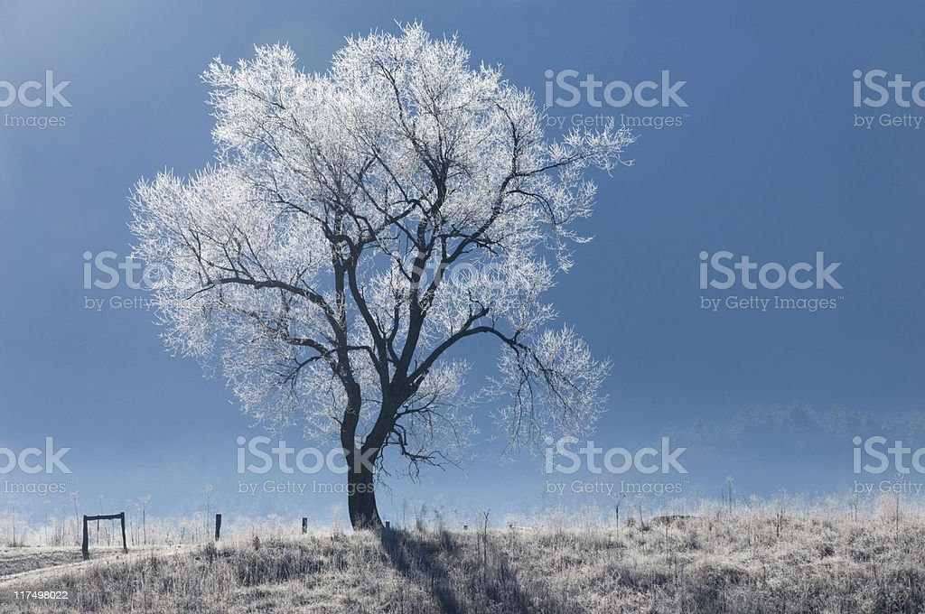 Cold Winter Morning stock photo