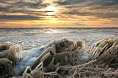 cold winter sunrise  landscape with reed covered in ice, markermeer, warder , The Netherlands