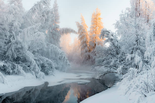 Coldest winter trees covered with snow at sunset still river stock photo