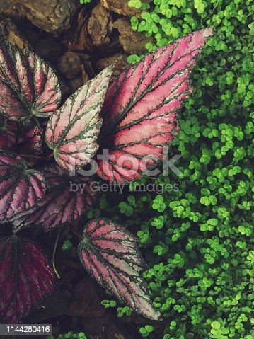Backgrounds, Beauty, Beauty In Nature, Botany
