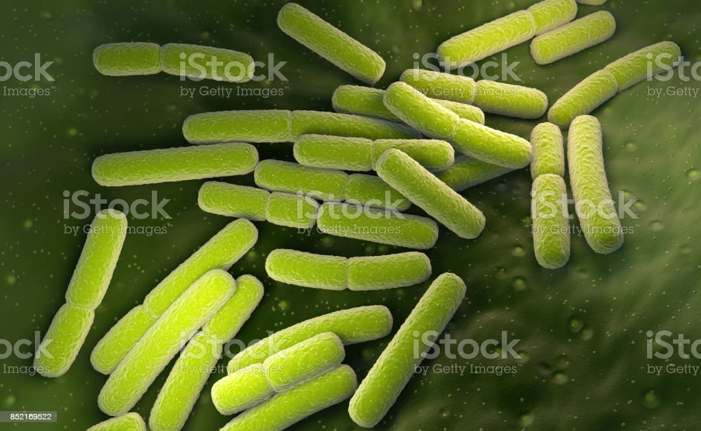 E. coli. Cellules de bactéries Escherichia coli - Photo