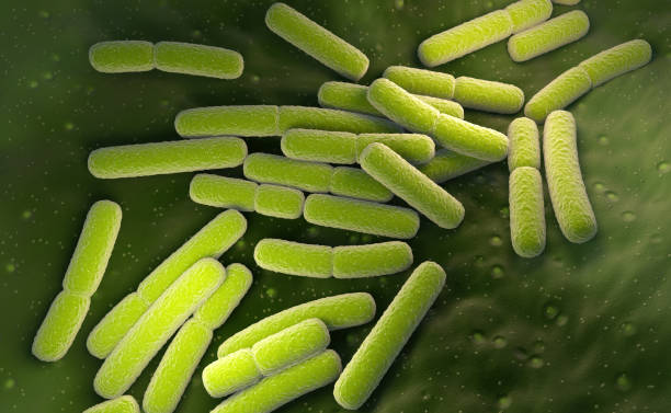 E. coli. Escherichia coli bacteria cells stock photo