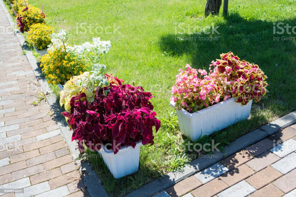 Colirful flower box on the street stock photo