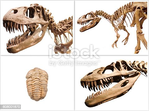 istock Collage composition of dinosaurs skeletons on white isolated background. 608001870