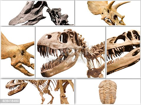 istock Collage composition of dinosaurs skeletons on white isolated background. 628418450