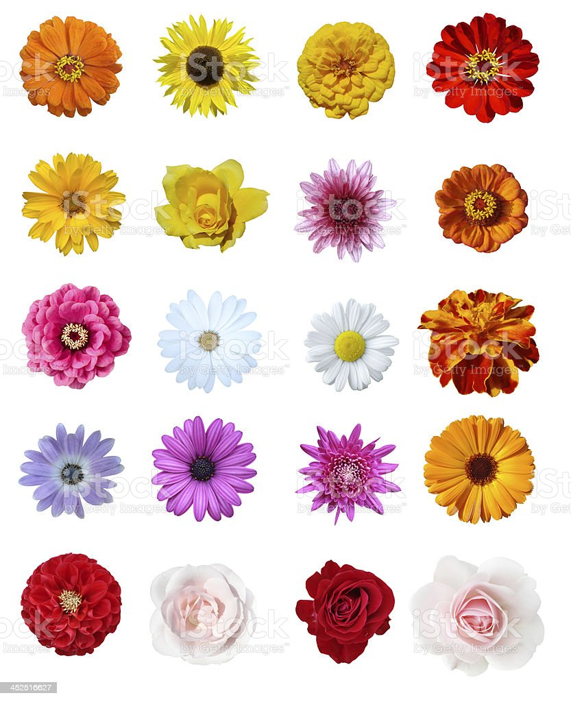 Collage flowers stock photo