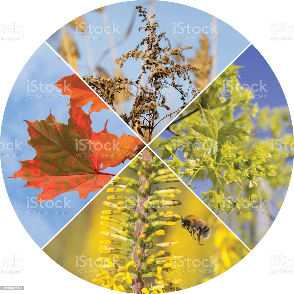 collage in in the form of a circle with four seasons of the year stock photo
