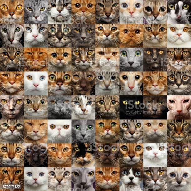 Collage of 64 cat faces picture id675947122?b=1&k=6&m=675947122&s=612x612&h=kg9fyrmpcr7evz0qu7mfm6gxojpp5upyvfbnees0kww=