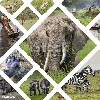 Collage of Animals from Tanzania - travel background (my photos)