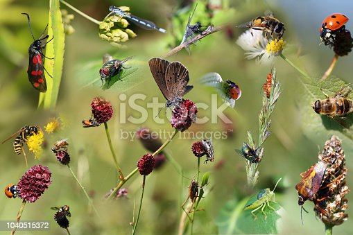 collage of beautiful different insects as poster.