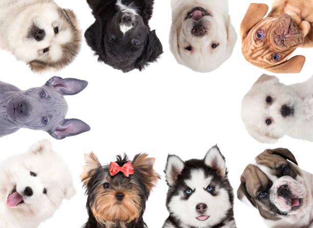Collage aus niedlichen Baby Hunde – Foto