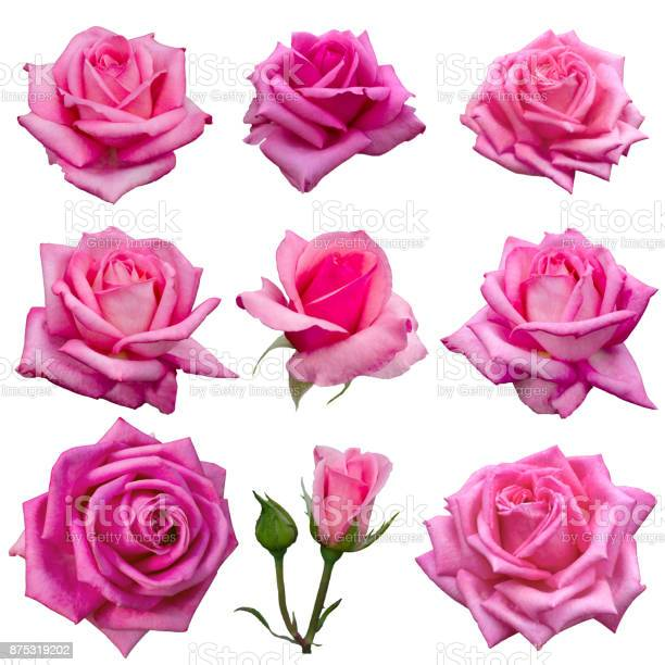 Collage of delicate pink roses picture id875319202?b=1&k=6&m=875319202&s=612x612&h=r3selblty aaapxu6cpgoaqok36lczdo9dk87s8rd4s=