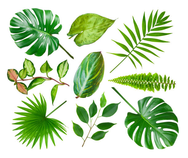 Collage of different exotic plant leaves isolated on white background stock photo