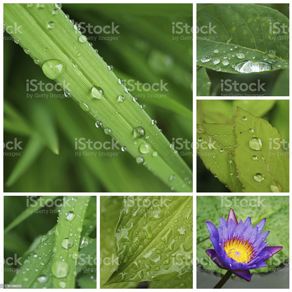 Collage of drop water on leaves stock photo
